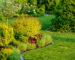 Three Years Old Home Garden. Garden Designing Concept.